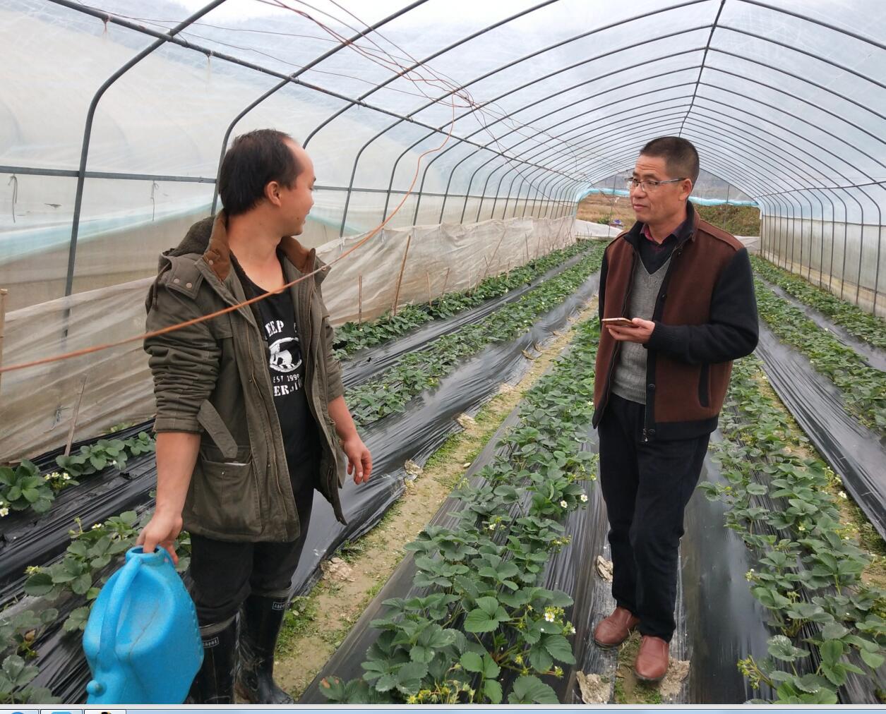 隆里乡状元郎草莓产业园拓展贫困户脱贫增收
